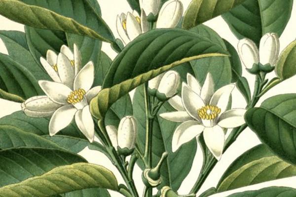 slider_ekultura_floral